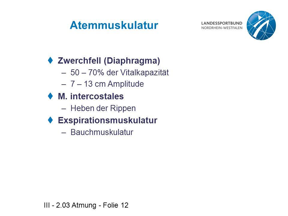 III - 2.03 Atmung - Folie 12 Atemmuskulatur  Zwerchfell (Diaphragma) –50 – 70% der Vitalkapazität –7 – 13 cm Amplitude  M. intercostales –Heben der