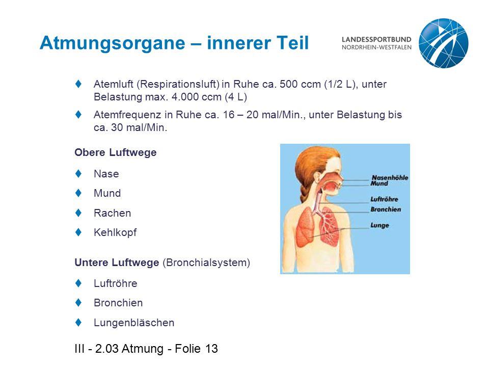 III - 2.03 Atmung - Folie 13 Atmungsorgane – innerer Teil Obere Luftwege  Nase  Mund  Rachen  Kehlkopf Untere Luftwege (Bronchialsystem)  Luftröh