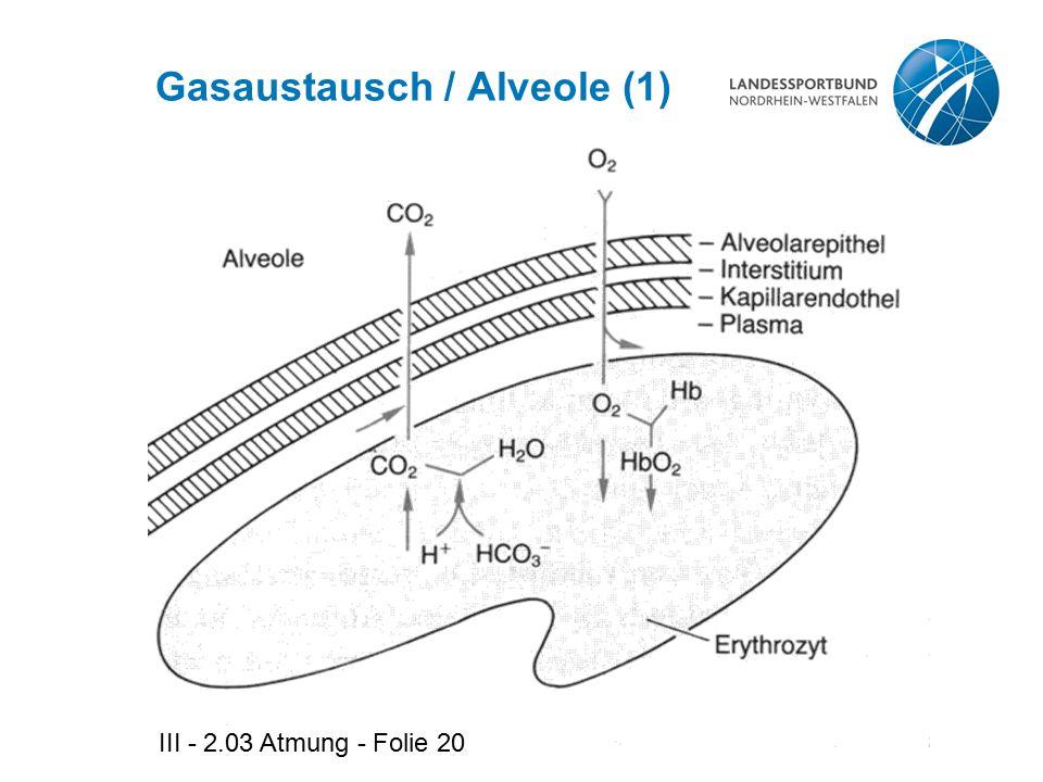 III - 2.03 Atmung - Folie 20 Gasaustausch / Alveole (1)