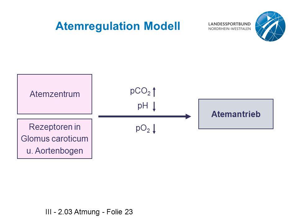 III - 2.03 Atmung - Folie 23 Atemregulation Modell Atemzentrum Atemantrieb Rezeptoren in Glomus caroticum u. Aortenbogen pCO 2 pH pO 2