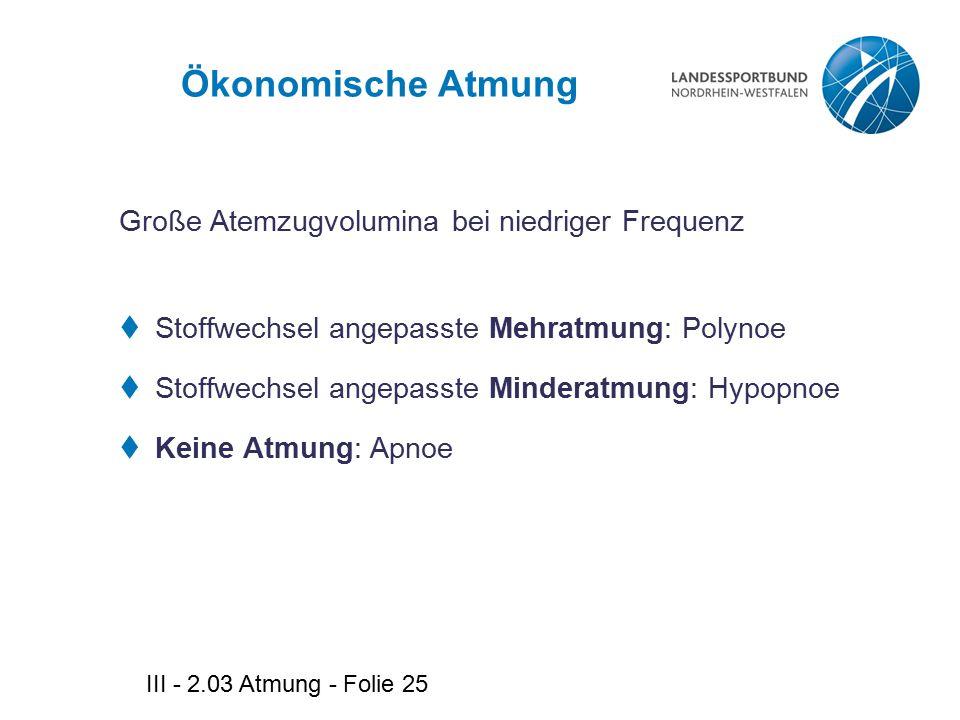 III - 2.03 Atmung - Folie 25 Ökonomische Atmung Große Atemzugvolumina bei niedriger Frequenz  Stoffwechsel angepasste Mehratmung: Polynoe  Stoffwech