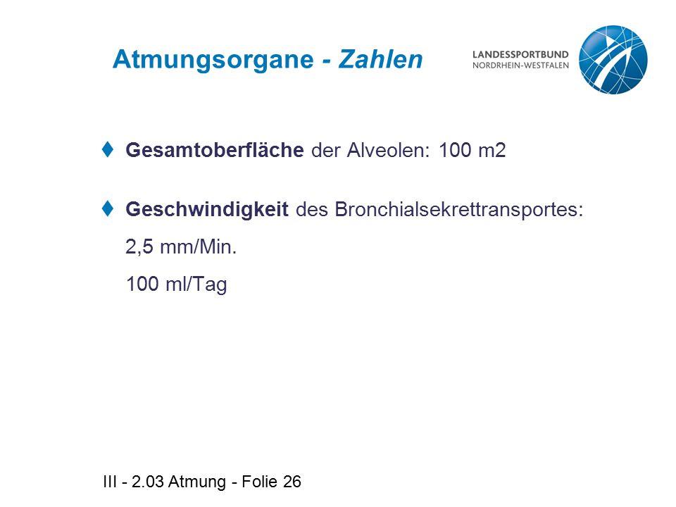 III - 2.03 Atmung - Folie 26 Atmungsorgane - Zahlen  Gesamtoberfläche der Alveolen: 100 m2  Geschwindigkeit des Bronchialsekrettransportes: 2,5 mm/M