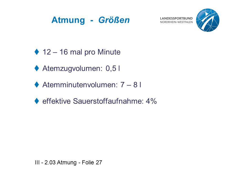 III - 2.03 Atmung - Folie 27 Atmung - Größen  12 – 16 mal pro Minute  Atemzugvolumen: 0,5 l  Atemminutenvolumen: 7 – 8 l  effektive Sauerstoffaufn
