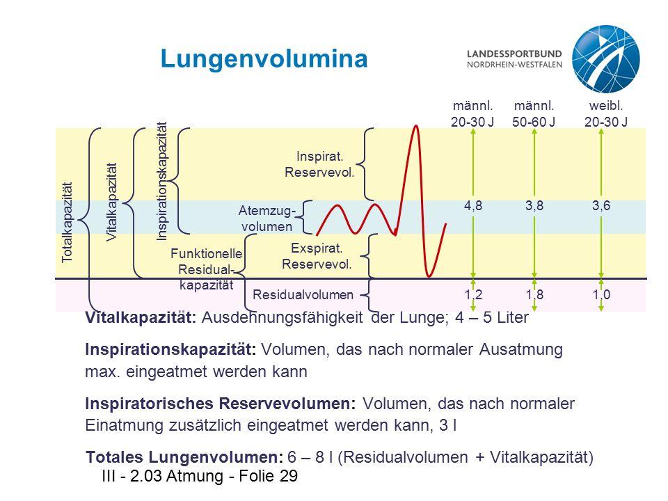 III - 2.03 Atmung - Folie 29 Lungenvolumina Vitalkapazität: Ausdehnungsfähigkeit der Lunge; 4 – 5 Liter Inspirationskapazität: Volumen, das nach norma