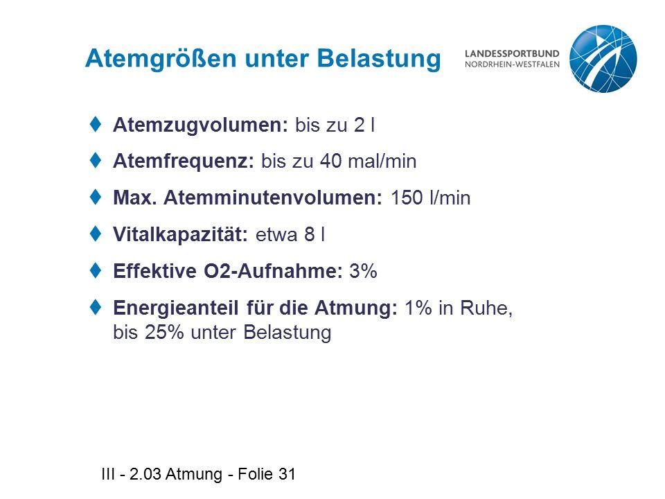 III - 2.03 Atmung - Folie 31 Atemgrößen unter Belastung  Atemzugvolumen: bis zu 2 l  Atemfrequenz: bis zu 40 mal/min  Max. Atemminutenvolumen: 150