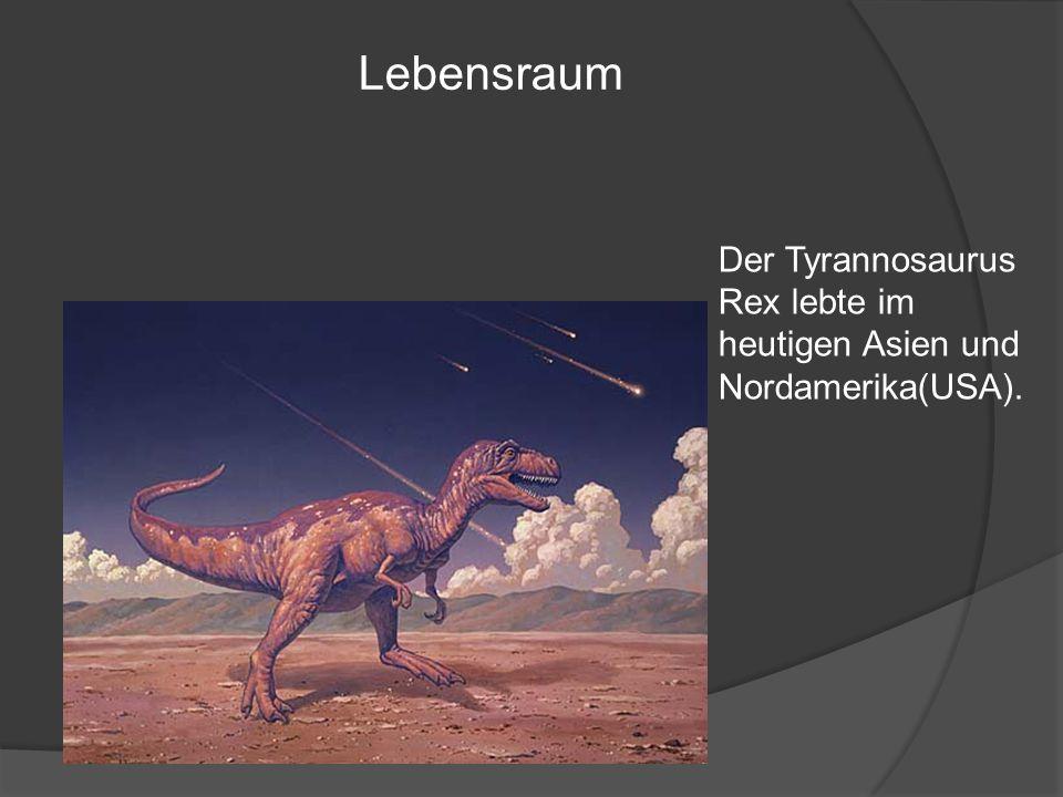 Der Tyrannosaurus Rex lebte im heutigen Asien und Nordamerika(USA). Lebensraum