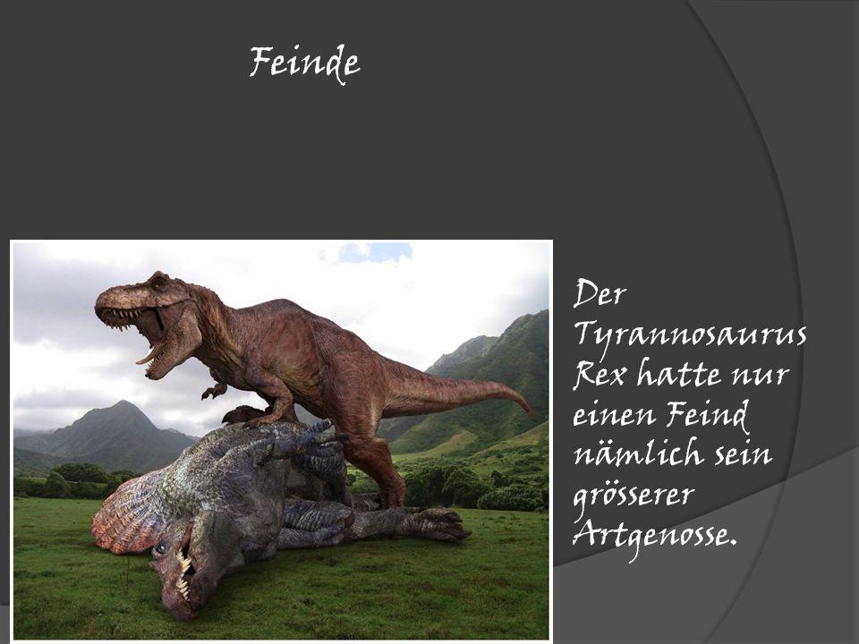 Feinde Der Tyrannosaurus Rex hatte nur einen Feind nämlich sein grösserer Artgenosse.