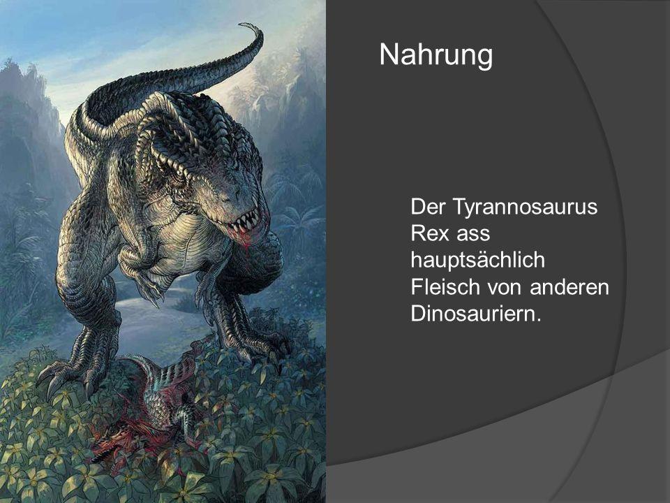 Nahrung Der Tyrannosaurus Rex ass hauptsächlich Fleisch von anderen Dinosauriern.