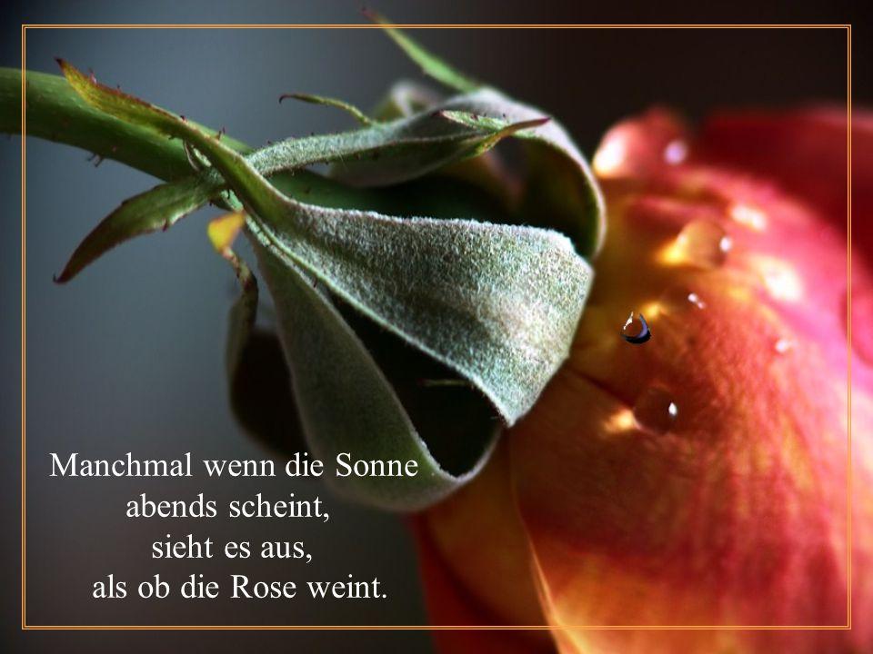 Dann spürt die Rose es gibt kein Entkommen, sie fühlt, dass das Ende hat begonnen.