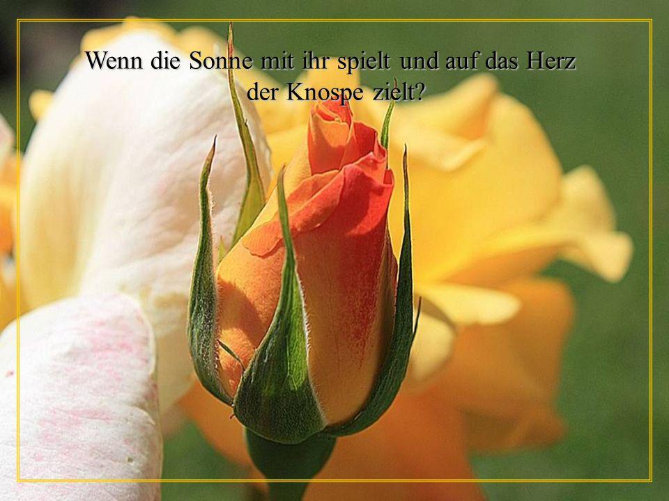Wenn die Sonne mit ihr spielt und auf das Herz der Knospe zielt? der Knospe zielt?