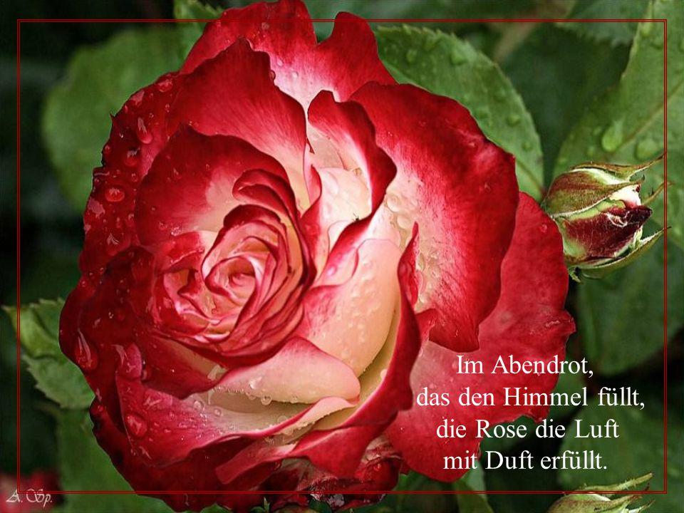 Im Abendrot, das den Himmel füllt, die Rose die Luft mit Duft erfüllt.