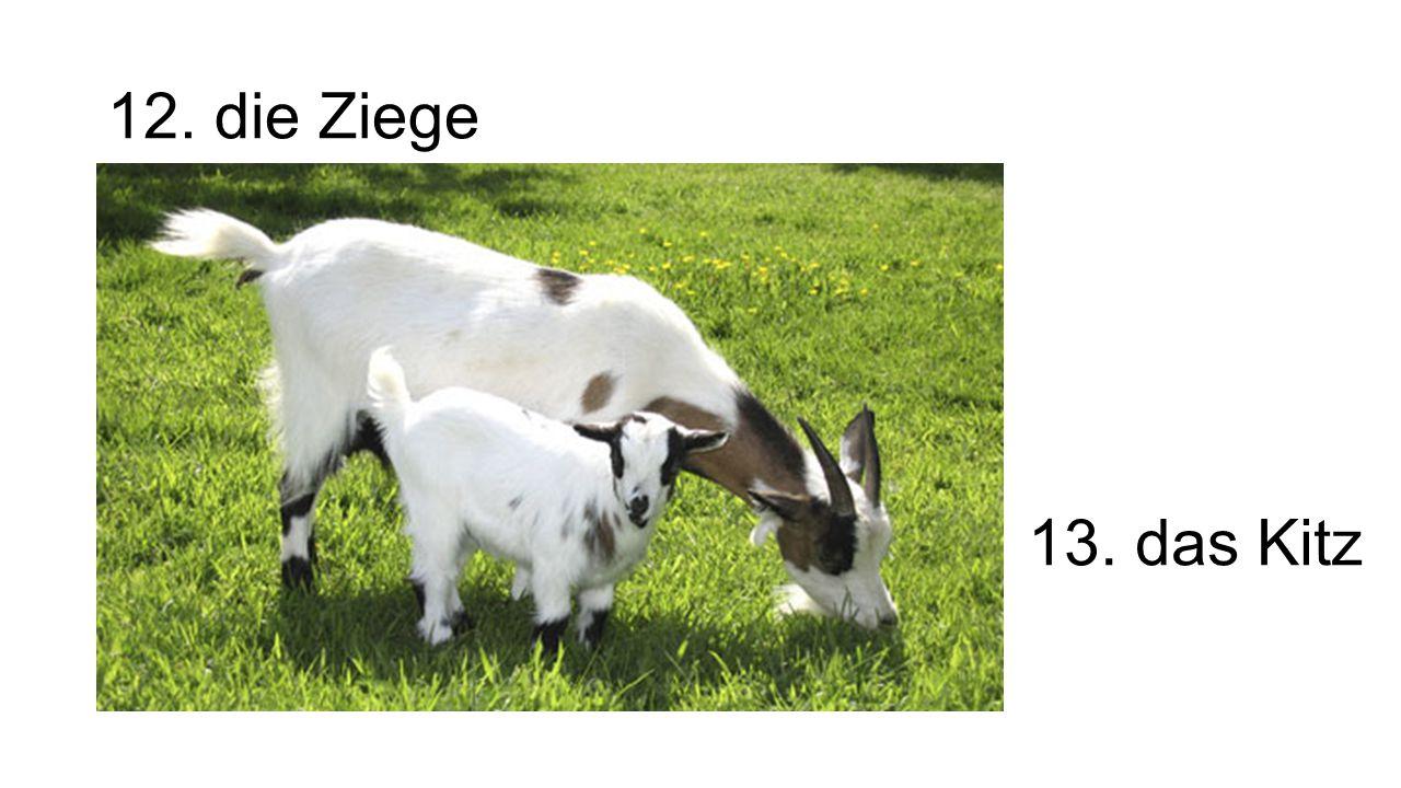 12. die Ziege 13. das Kitz