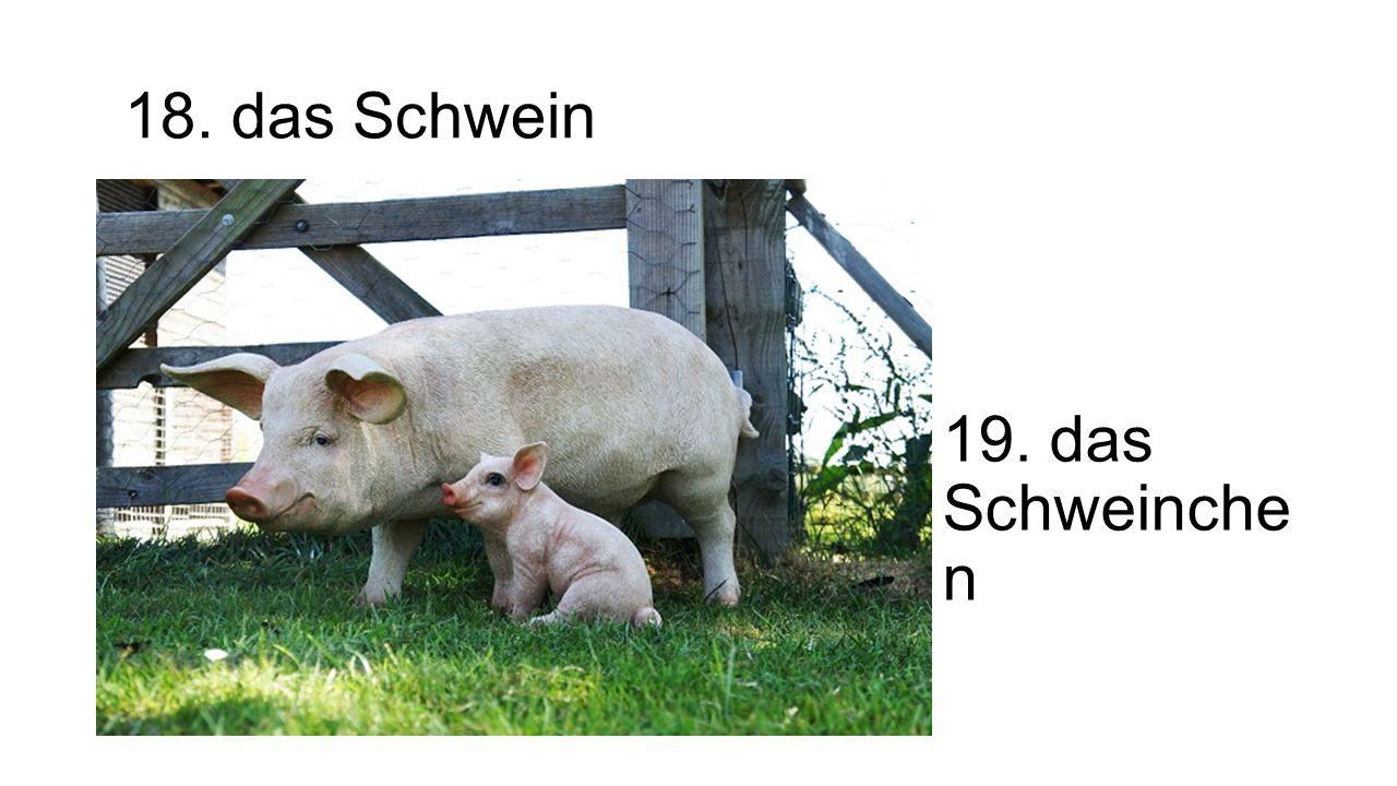 18. das Schwein 19. das Schweinche n