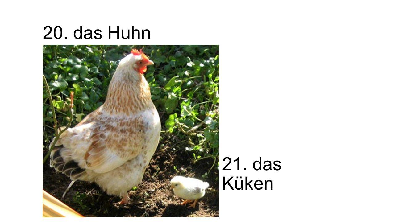 20. das Huhn 21. das Küken