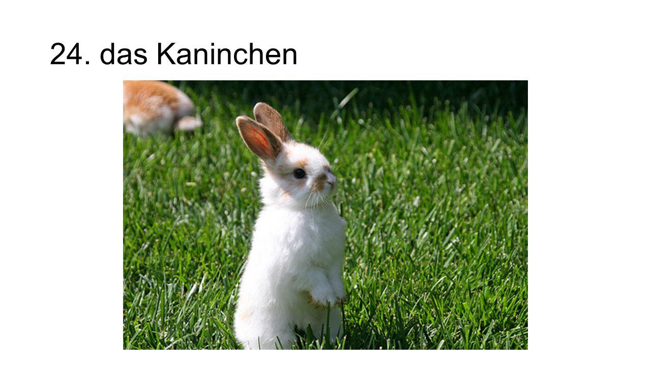 24. das Kaninchen