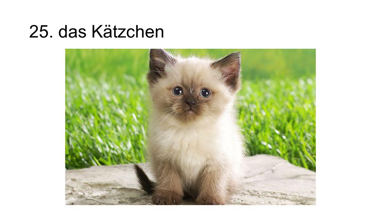 25. das Kätzchen