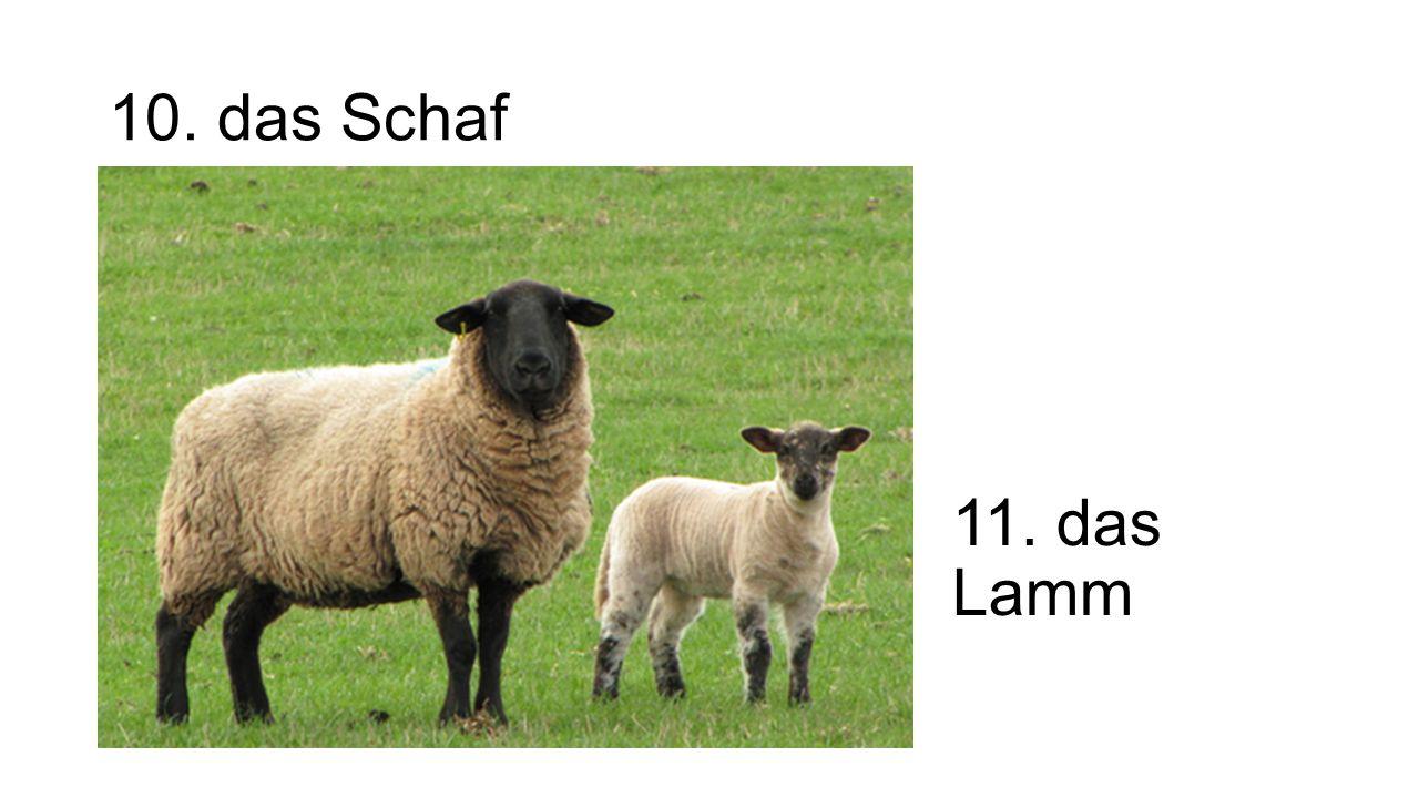 Vokabeln #2 – der Bauernhof 1.der Bauer / die Bäuerin 2.die Scheuer 3.der Traktor 4.das Feld 5.die Kuh 6.das Kalb 7.der Bulle 8.das Pferd 9.das Fohlen 10.das Schaf 11.das Lamm 12.die Ziege 13.das Kitz 14.die Ente 15.das Entchen 16.die Gans 17.das Gänschen 18.das Schwein 19.das Schweinchen 20.das Huhn 21.das Küken 22.der Hahn 23.der Esel 24.das Kaninchen 25.das K ä tzchen 26.der Hündchen