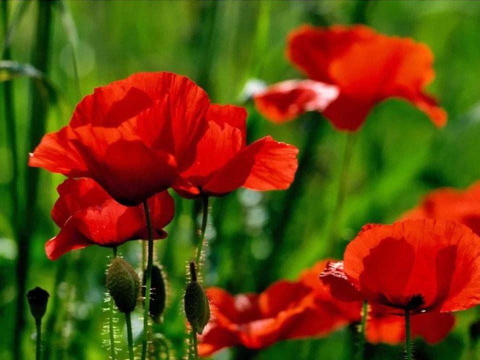 berührendes rot, von besonderem Glanz,