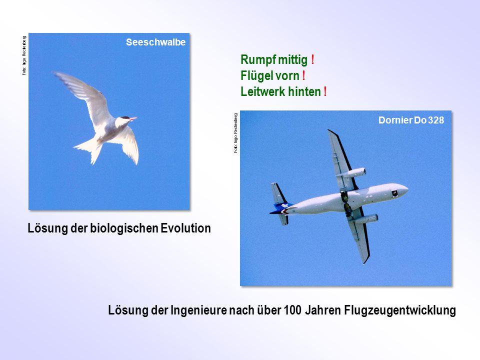 Rumpf mittig ! Flügel vorn ! Leitwerk hinten ! Lösung der Ingenieure nach über 100 Jahren Flugzeugentwicklung Lösung der biologischen Evolution Seesch