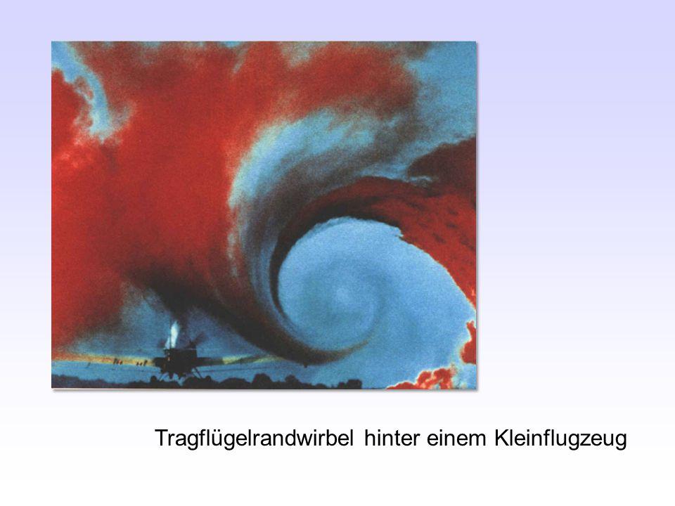 Rabengeier - Funktion der Daumenfittiche .