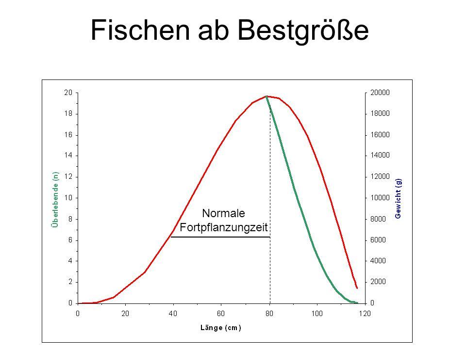 Fischen ab Geschlechtsreife ½ Fortpflanzungszeit