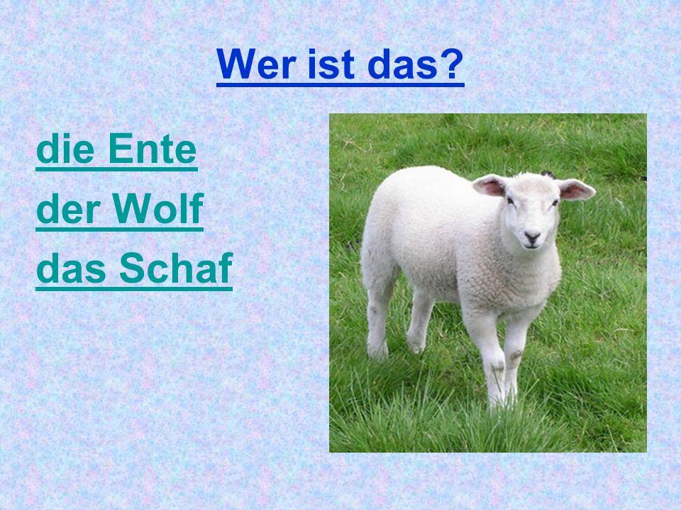 Wer ist das? die Ente der Wolf das Schaf