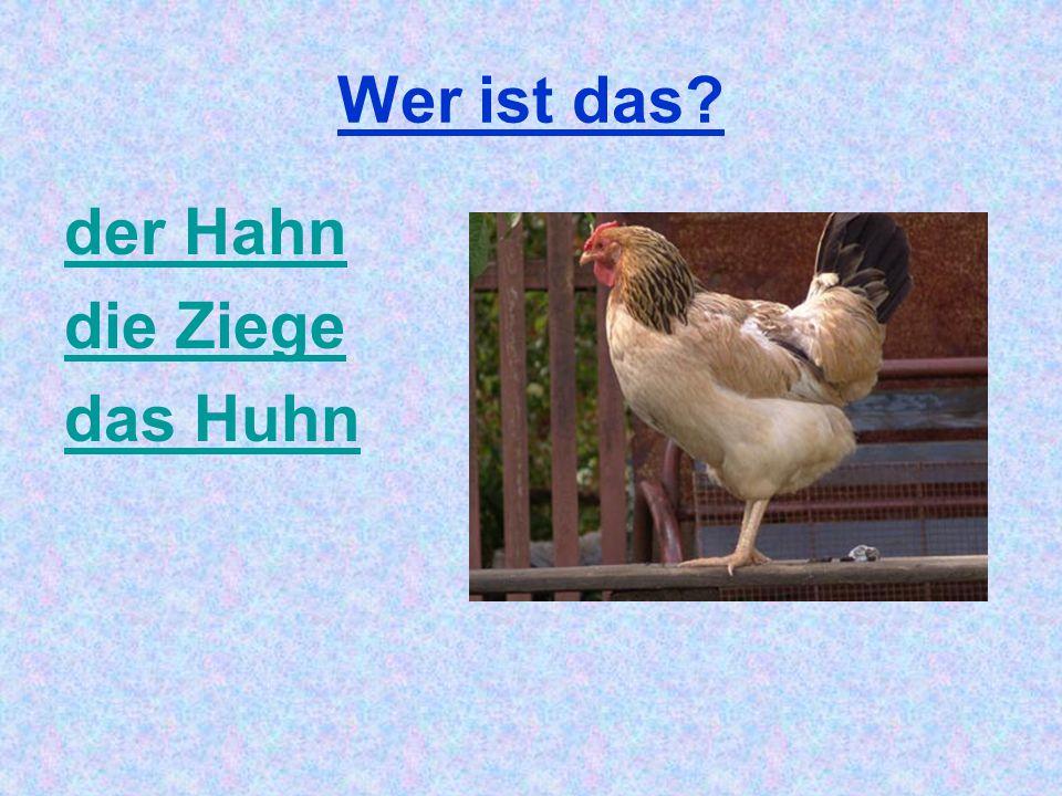 Wer ist das? der Hahn die Ziege das Huhn