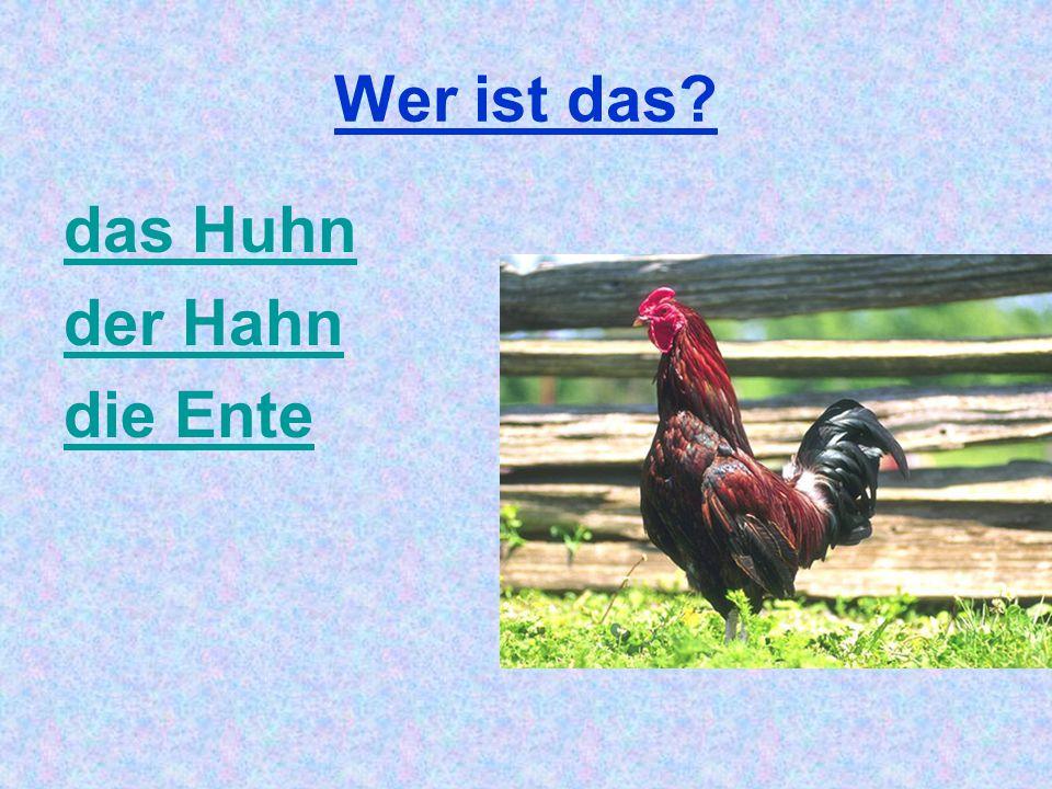 Wer ist das? das Huhn der Hahn die Ente