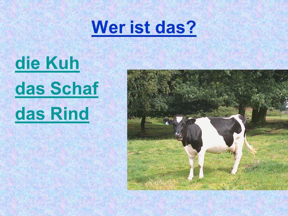 Wer ist das? die Kuh das Schaf das Rind