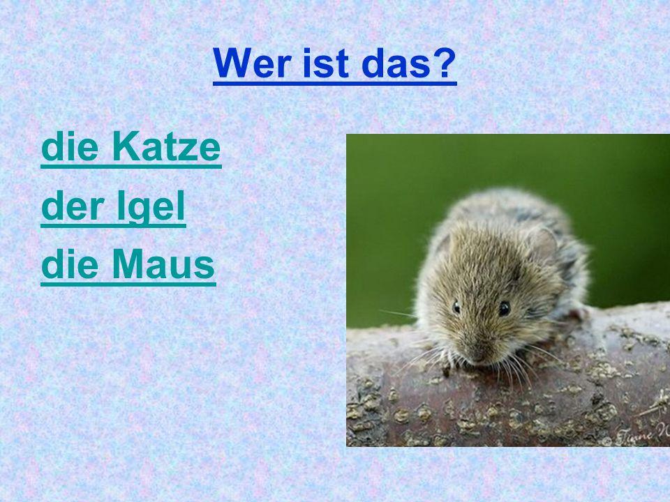 Wer ist das? die Katze der Igel die Maus