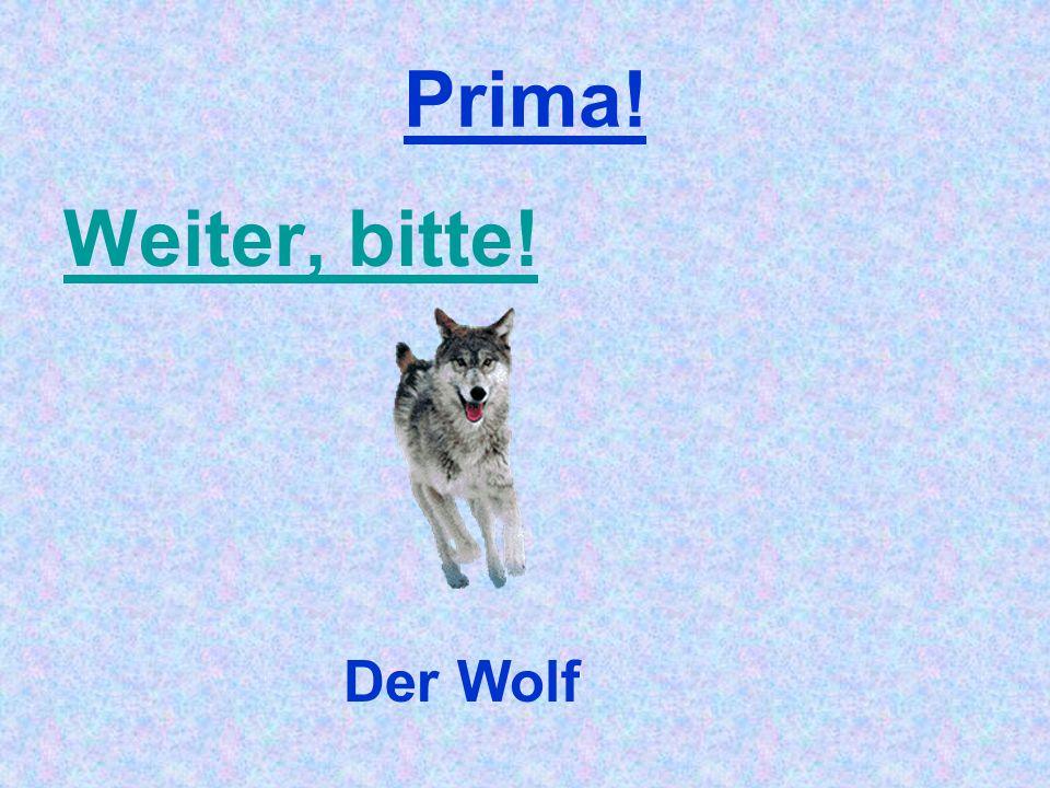Prima! Weiter, bitte! Der Wolf