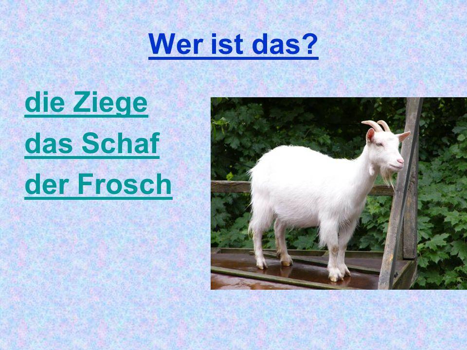 Wer ist das? die Ziege das Schaf der Frosch