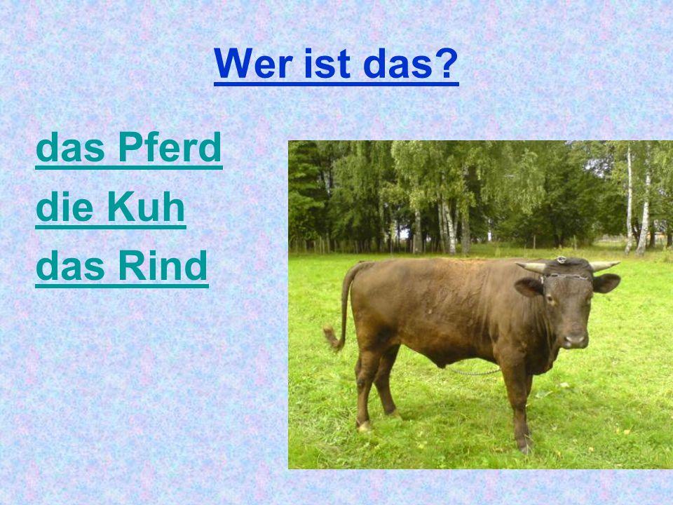 Wer ist das? das Pferd die Kuh das Rind