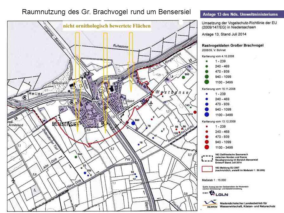 Raumnutzung des Gr. Brachvogel rund um Bensersiel Anlage 13 des Nds. Umweltministeriums
