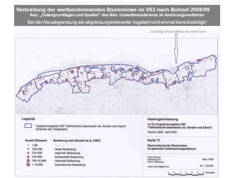Bei der Neuabgrenzung als abgrenzungsrelevante Vogelart nicht einmal berücksichtigt ! Verbreitung der wertbestimmenden Sturmmöwe im V63 nach Bohnet 20