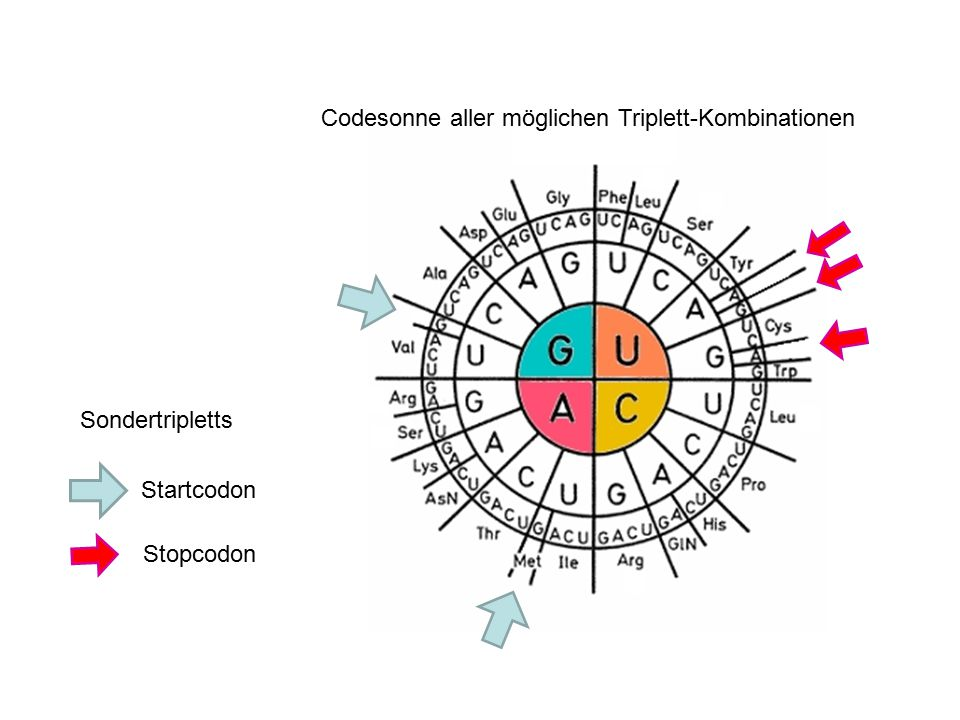 Sondertripletts Startcodon Stopcodon Codesonne aller möglichen Triplett-Kombinationen