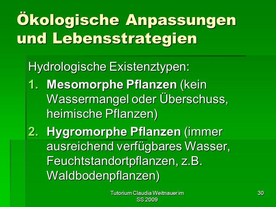 Tutorium Claudia Weitnauer im SS 2009 30 Ökologische Anpassungen und Lebensstrategien Hydrologische Existenztypen: 1.Mesomorphe Pflanzen (kein Wasserm