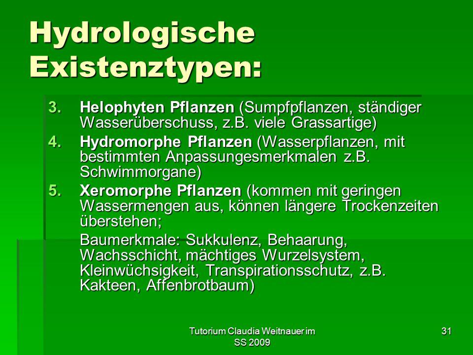 Tutorium Claudia Weitnauer im SS 2009 31 Hydrologische Existenztypen: 3.Helophyten Pflanzen (Sumpfpflanzen, ständiger Wasserüberschuss, z.B. viele Gra
