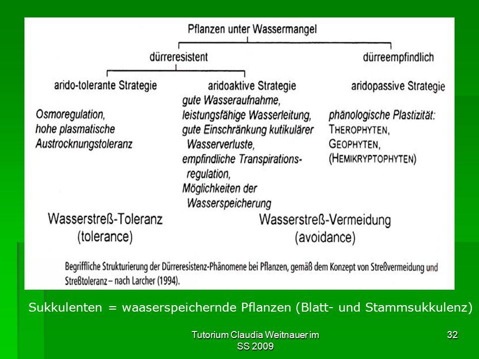 Tutorium Claudia Weitnauer im SS 2009 32 Sukkulenten = waaserspeichernde Pflanzen (Blatt- und Stammsukkulenz)
