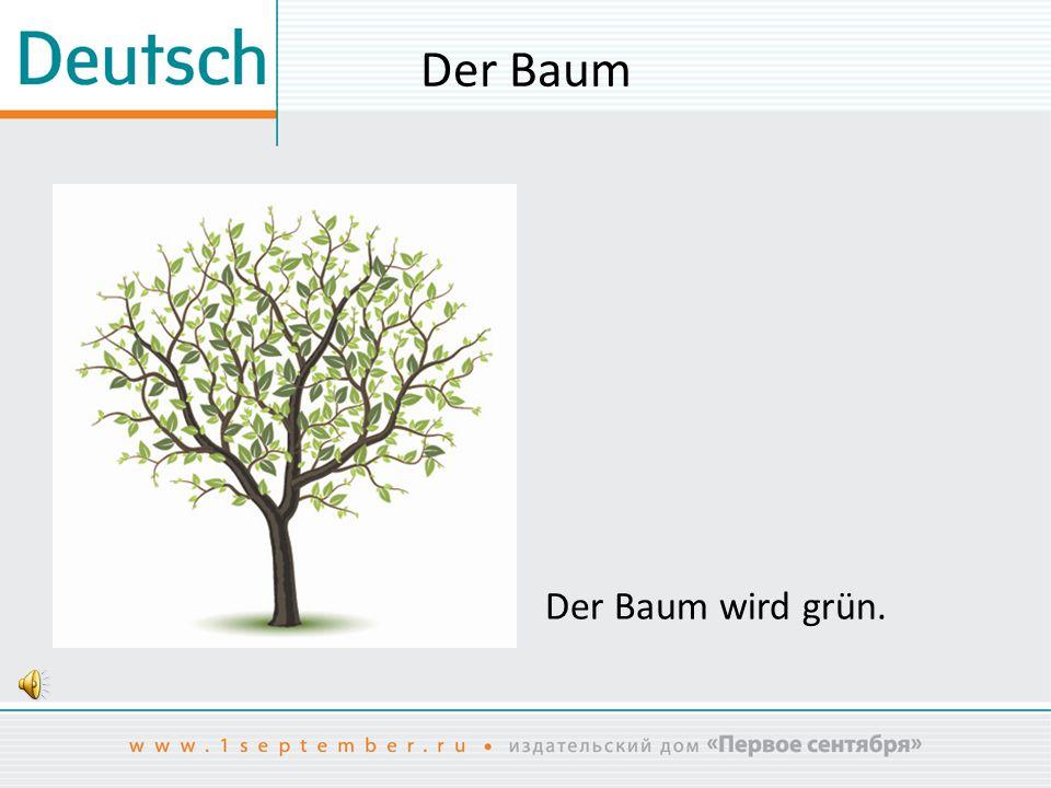 Der Baum Der Baum wird grün.