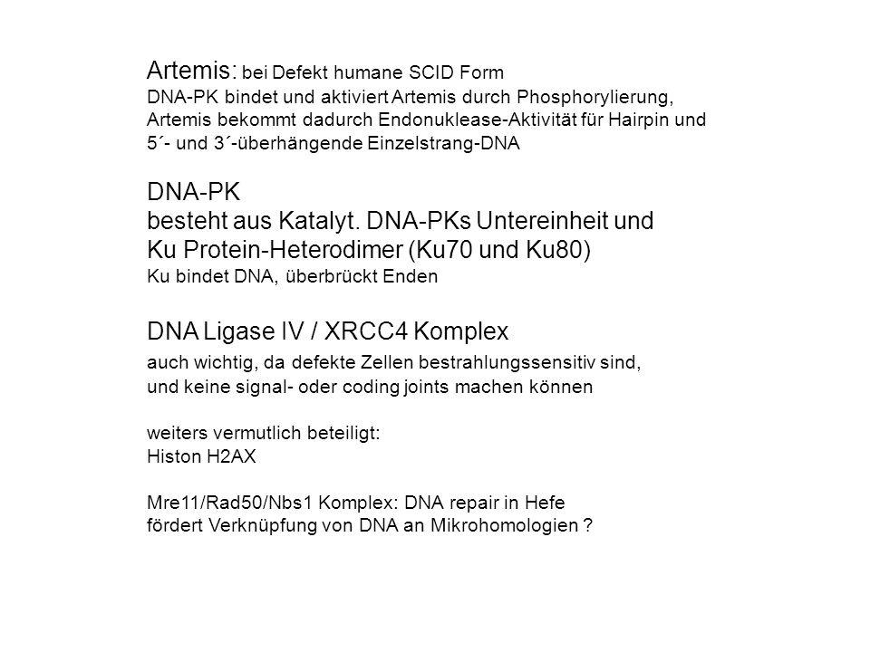 Artemis: bei Defekt humane SCID Form DNA-PK bindet und aktiviert Artemis durch Phosphorylierung, Artemis bekommt dadurch Endonuklease-Aktivität für Ha