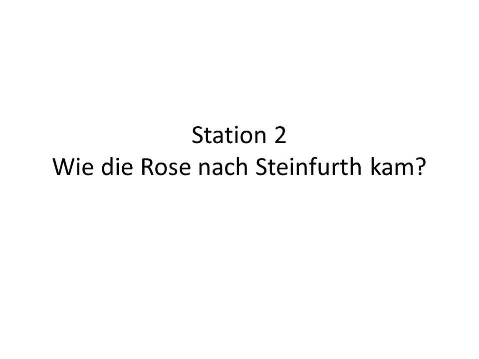 Station 2 Wie die Rose nach Steinfurth kam?