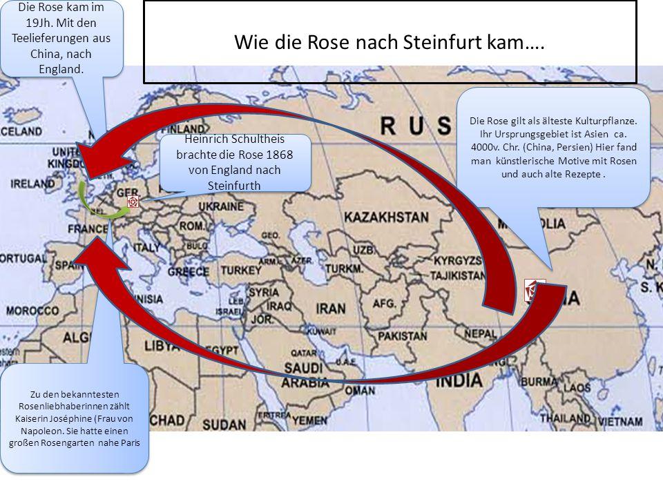 Die Rose gilt als älteste Kulturpflanze.Ihr Ursprungsgebiet ist Asien ca.