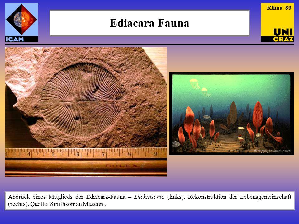 Ediacara Fauna Abdruck eines Mitglieds der Ediacara-Fauna – Dickinsonia (links). Rekonstruktion der Lebensgemeinschaft (rechts). Quelle: Smithsonian M