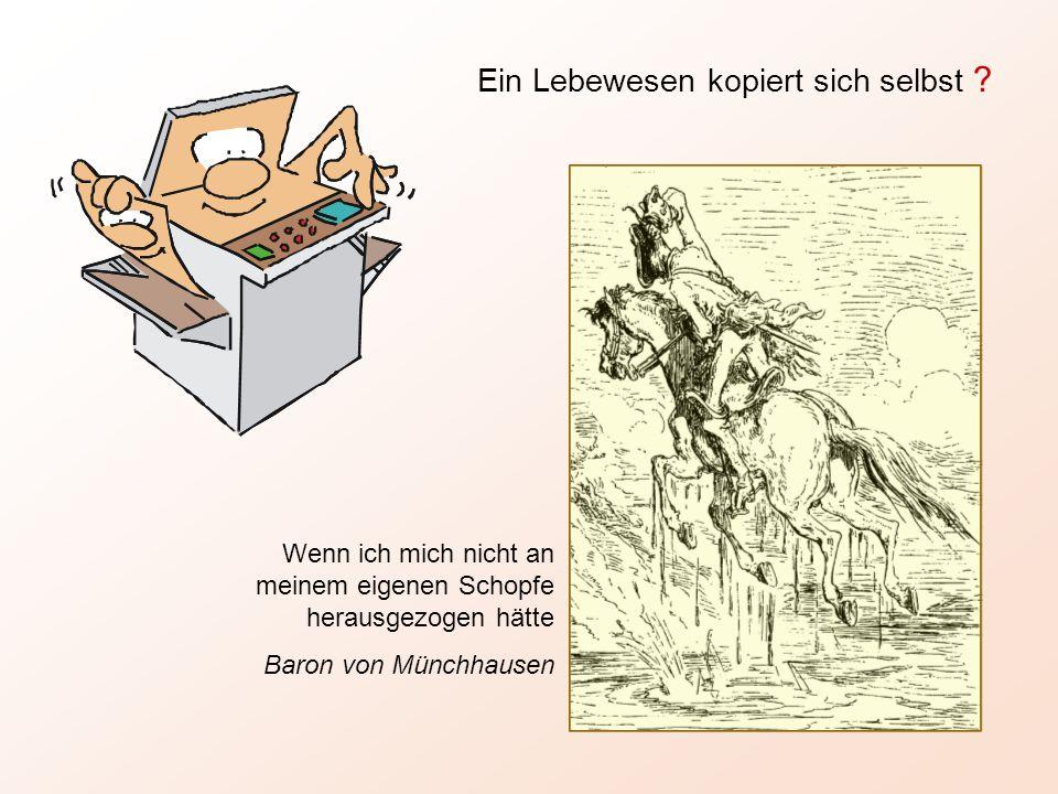 Wenn ich mich nicht an meinem eigenen Schopfe herausgezogen hätte Baron von Münchhausen Ein Lebewesen kopiert sich selbst ?