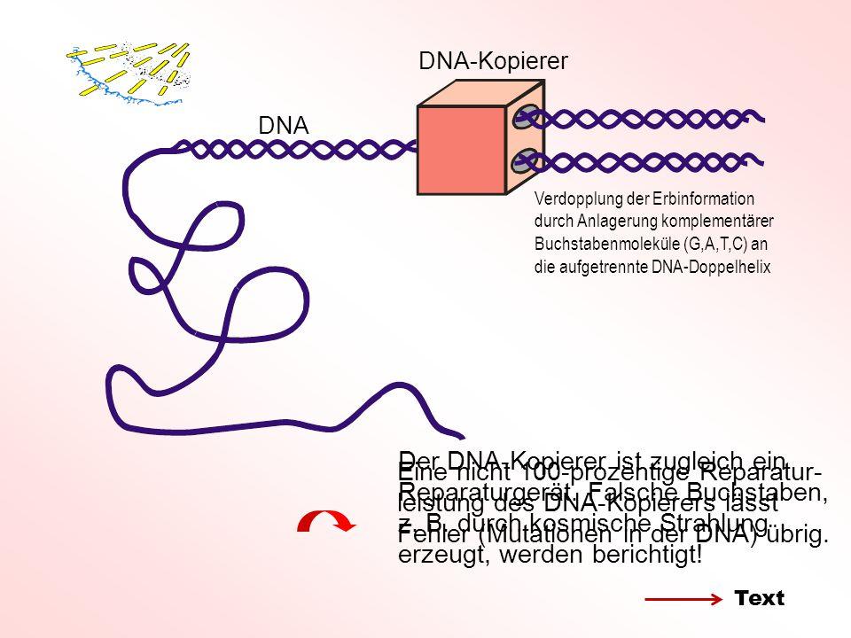 DNA-Kopierer DNA Der DNA-Kopierer ist zugleich ein Reparaturgerät.