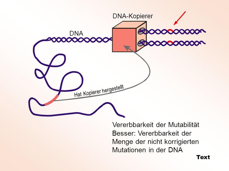 DNA-Kopierer DNA Hat Kopierer hergestellt Vererbbarkeit der Mutabilität Text Besser: Vererbbarkeit der Menge der nicht korrigierten Mutationen in der DNA
