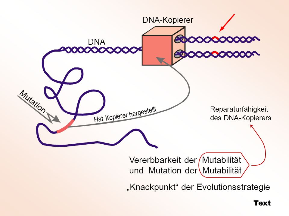 """Mutation DNA-Kopierer DNA Hat Kopierer hergestellt Vererbbarkeit der Mutabilität und Mutation der Mutabilität """"Knackpunkt der Evolutionsstrategie Text Reparaturfähigkeit des DNA-Kopierers"""
