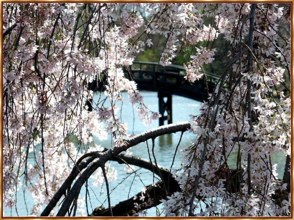 Ein aufrechter Baum: Er trägt seine Äste und diese Zweige und diese Blätter.
