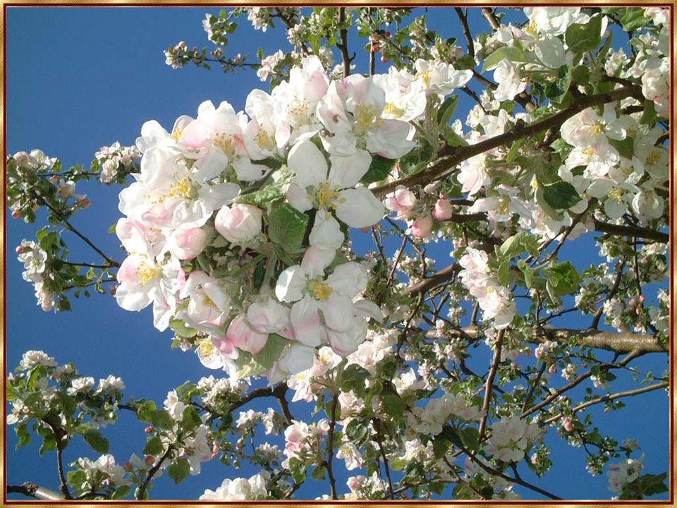 In einer einzigen Blume gibt es genug Material, um Dutzende von Kathedralen damit auszuschmücken.
